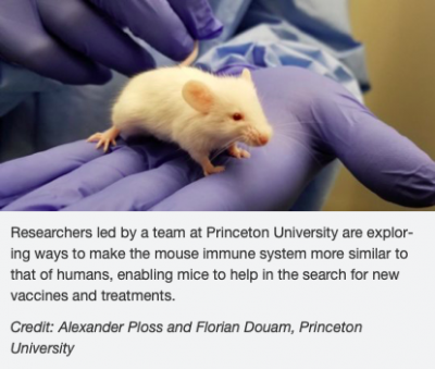 Mouse Model Yields Possible Treatment >> Congratulations To Florian For His Recent Publication In Nature
