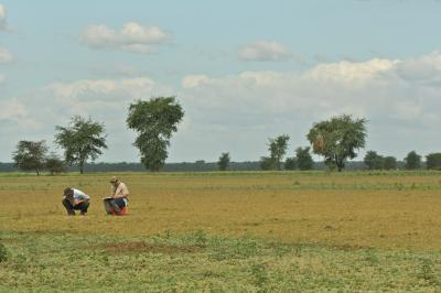 Urema floodplain survey with T. Kartzinel (photo credit J. Daskin)