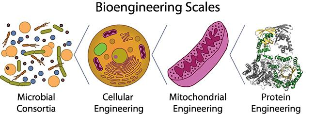 Figure 1: Bioengineering Scales