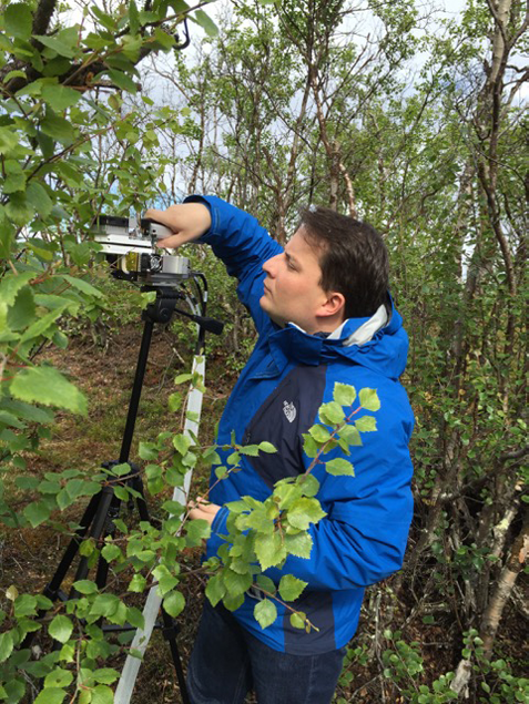 Postdoctoral Research Associate Paul Gauthier setting up gas exchange measurements on arctic birch's leaves in Stordalen National Park.  Photos by: J. Redmond