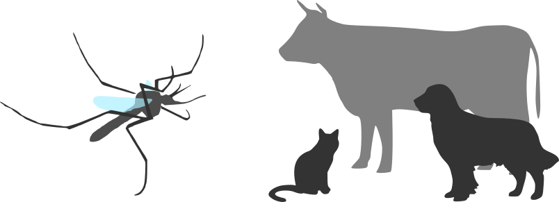mosquito_animals_silhouette.png