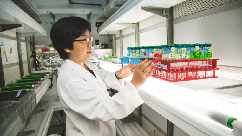 Xinning Zhang examining samples in the lab